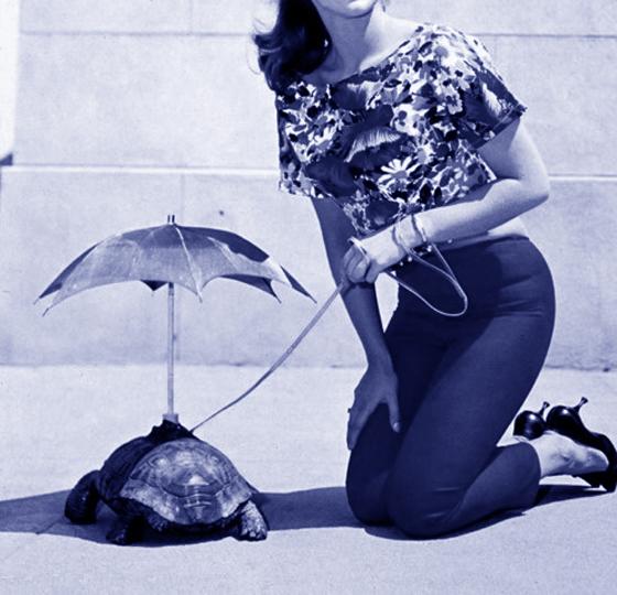 AnnMargret_Tortoise